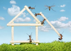 Ant-at-work-pics-2-300x216
